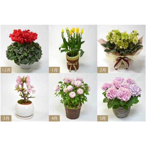 鉢植えの花の定期購入