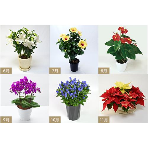 花のある暮らしの花鉢の画像