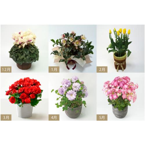 花のある暮らし毎月届く鉢植えの花(花鉢の頒布会)