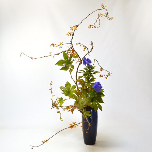晩秋のいけばな花材<蔓梅擬・紅葉木苺・鳥兜>