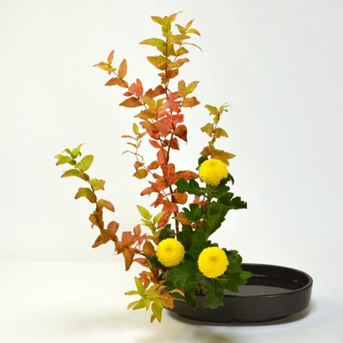 秋のいけばな花材<紅葉ヒペリカム・ピンポンマム>