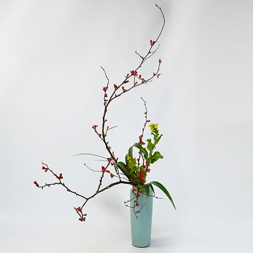 早春いけばな花材<花木瓜・薯莪・菜の花>