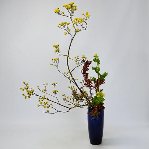 早春いけばな花材<山茱萸・紅柘植・菜の花>