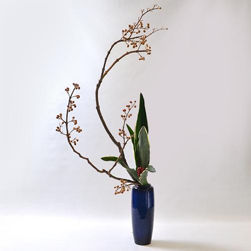 冬いけばな花材 <桐・万年青>