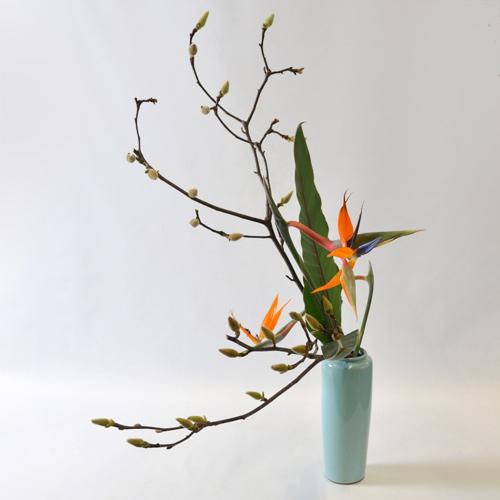 早春いけばな花材<白木蓮・曲がりストレチア・ストレチアの葉>