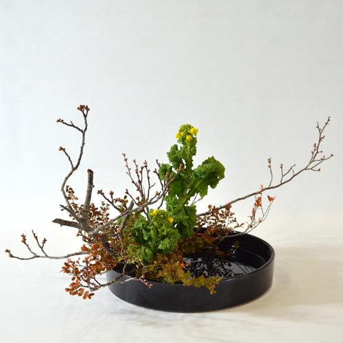 早春いけばな花材<梅・紅柘植・菜の花>