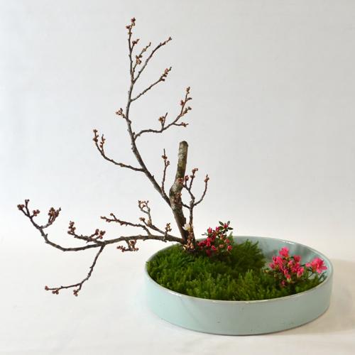 早春いけばな花材<梅・錦紅花躑躅・立日蔭>
