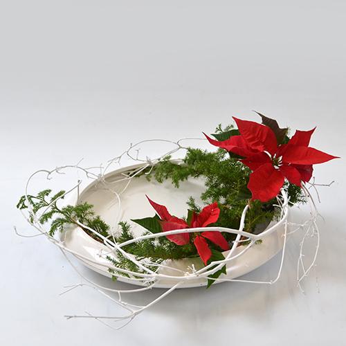 クリスマスいけばな花材<白塗り満天星・氷室杉・ポインセチア>