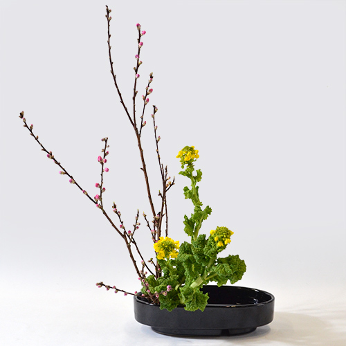 花桃いけばな花材<桃・菜の花>