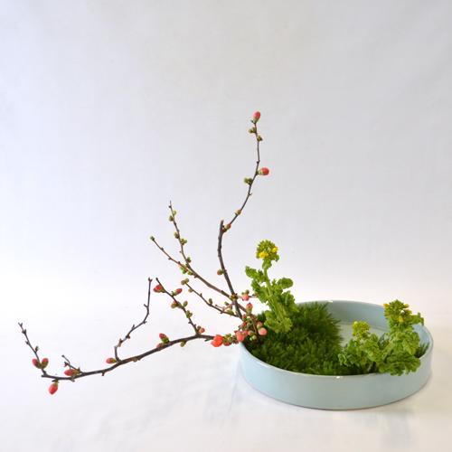早春いけばな花材 <花木瓜・菜の花など>