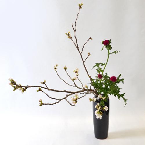 桜いけばな花材<吉野桜・薊>