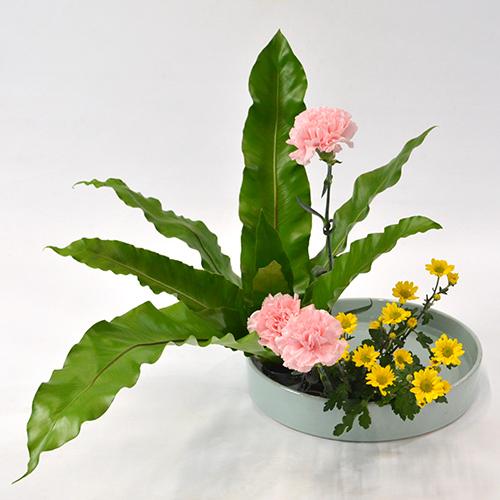 いけばな花材<谷渡り・カーネーション・小菊>