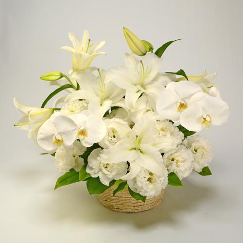 ご供花 胡蝶蘭とユリの純白のアレンジメント